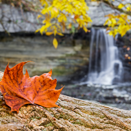Autumn Leaf and Waterfall by Kenneth Keifer - Landscapes Forests ( countryside, single, stone, rock, flow, yellow, close, nature, tree, autumn, fallen, foliage, bark, reddish, focus, motion, orange, cliff, canyon, rural, country, trunk, mccormicks creek, cataract, indiana, stream, hardwood, colorful, deciduous, waterfall, blur, landscape, oak, state park, long exposure, september, water, autumn leaves, flowing, scenic, blurred, wilderness, red, splashing, cascade, fall, changing, october, whitewater )