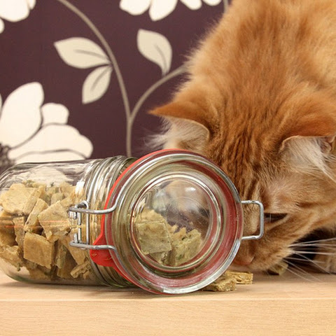 Chewy Cat Treats for Cats