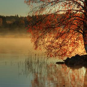 Autumn beauty by Julija Moroza Broberg - Landscapes Forests ( orange, birch, reflection, foggy, tree, fog, autumn, lake, sunrise, morning, light )