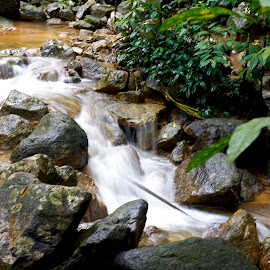 Babbling Brook by Norman Tan - Nature Up Close Water ( water, stream, nature, leaves, rocks,  )