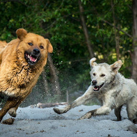 Born Free! by Shivaang Sharma - Animals - Dogs Running ( speed, run, har, doon, bhutia, dun, ki, nature, pahari, india, dog, motion, animal,  )