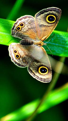 美麗的蝴蝶拼圖!