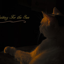 Waiting For the Sun by Dallas Landriault - Typography Captioned Photos