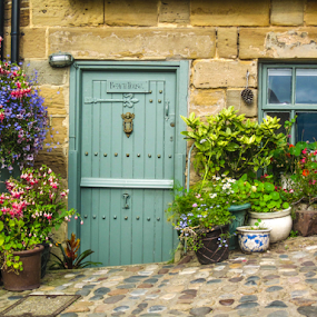 Door with flowers garden in planters by Del Candler - Buildings & Architecture Architectural Detail ( purple, blue green, green, door, planters, north yorkshire, england, robin hoods bay, red, window, stone building, pink, flowers, cobblestone,  )