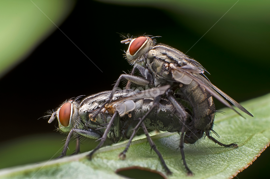 Rated R: Doggie Style by Percy Photography - Animals Insects & Spiders