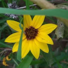 Sunflower .....my photography by Srishti Pandey - Nature Up Close Gardens & Produce