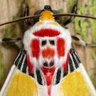 Tiger moth with clown face