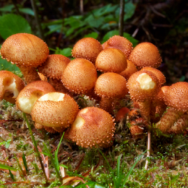 Mashroom family by Stanislav Horacek - Nature Up Close Mushrooms & Fungi
