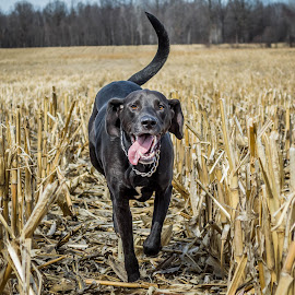 by Danielle Mettling - Animals - Dogs Playing