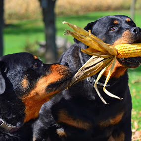 My Corn!!! by Linda Othersen - Animals - Dogs Portraits