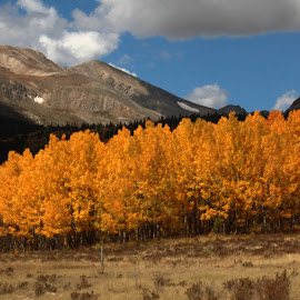 Colorado Fall Colors by Bill Shumard - Nature Up Close Trees & Bushes
