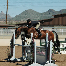 Jumping horse by Lisa Coletto - Sports & Fitness Other Sports ( hunter, equine, hunter jumper, horse, jumper,  )