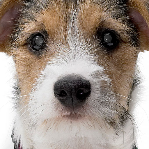 My Pet Record LOGO-APP點子
