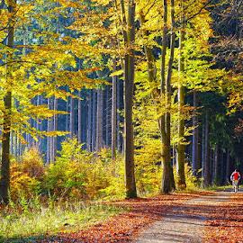autumn by David Solodar - Landscapes Forests ( park, autumn, forest )