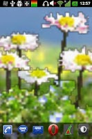 Screenshot of Daisy Flowers Free Wallpaper