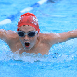 Butterfly  by Greg Labuscagne - Sports & Fitness Swimming ( water, butterfly, pool, gala, swimming )