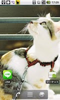 Screenshot of Cats Charity Live Wallpaper