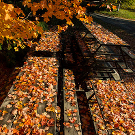 Mapple Leaves Table  by Vu Danh - City,  Street & Park  City Parks (  )