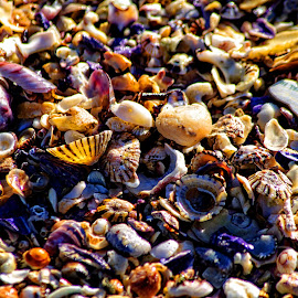 shells by Arnaud Charil - Abstract Patterns ( sand, shells, nature, beach, close )