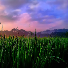 Rice Field by Wawan Ramadhan - Landscapes Prairies, Meadows & Fields