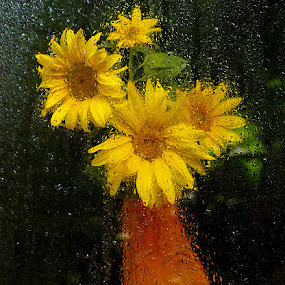 Behind rainy window by Zeljko Kustec - Flowers Flower Arangements ( window, sunflower, flower )