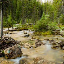 Forest by Joseph Law - Landscapes Forests ( bushes, streams from the melting glacies, banff national park, trees, forest, rocks, inthe rocky mountains )