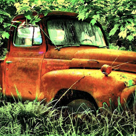 Put to Pasture by Julie Dant - Transportation Automobiles ( abandoned trucks, old trucks, antique trucks, orange trucks, nostalgic vehicles )