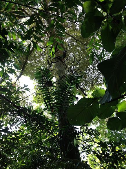durian tree project noah