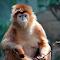 Langur Monkey.jpg