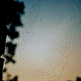 by Pam Satterfield Manning - Nature Up Close Webs ( webs, other object, other, nature, nature up close, nature photography, spider web,  )