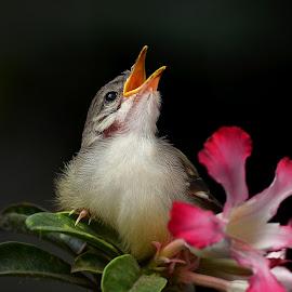 little bird by Dikky Oesin - Animals Birds ( bird, wing, beak, feather, small )