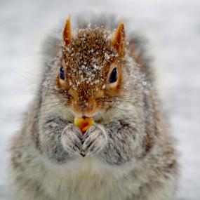 Yummy, Yummy by Rob Kovacs - Novices Only Wildlife (  )