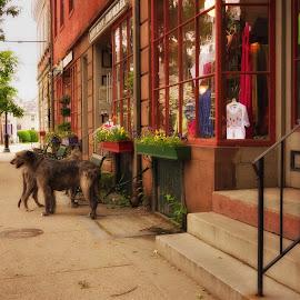 Wickford Rhode Island by Alan Roseman - City,  Street & Park  Street Scenes ( americana, dogs, wickford, rhode island, summertime, main street )