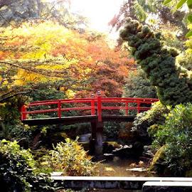 Japanese Garden by Edie Delzer - City,  Street & Park  City Parks