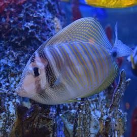 by Janet Blackwell Wilson - Animals Fish (  )