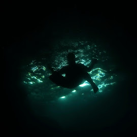 Grotto Swimmer by David Gilchrist - Sports & Fitness Swimming ( grotto, cave, swimming, rock jumping, swimmer )