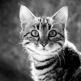 by David Monjou - Animals - Cats Portraits