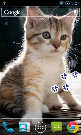 Kitten Paws Live Wallpaper