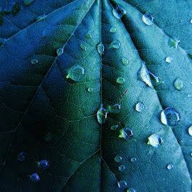 trickery by Jesse Kilmon - Nature Up Close Leaves & Grasses ( macro, dew, clue, leaf, dew drops,  )