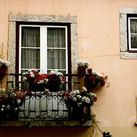 Traditions! by Joana Domingues - Buildings & Architecture Homes ( home, window, street, traditions, lisbon, house, portugal, flowers, street photography )