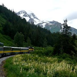 Alaska Summer by Daniel Bottoms - Transportation Trains ( mountains, alaska, summer, train, scenic, flowers, landscape,  )