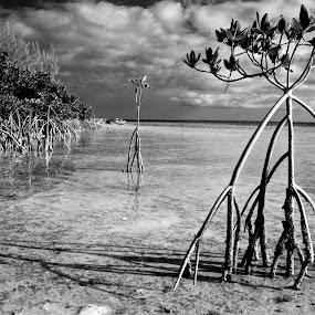 Bonefish Salt Flats by Chris Wilson - Black & White Landscapes ( mangroves, black and white, bonefish, trees, ocean, beach, seascape, landscape, bahamas )