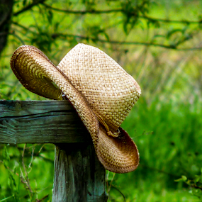 by Donna Nicklas - Uncategorized All Uncategorized ( cowboy, post, horses, straw, green, beautiful, handmade, landscape, hat, fence, nature, outdoors, weave, trees, brown, western, wove, calendar )