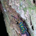 Dwarf lanternfly