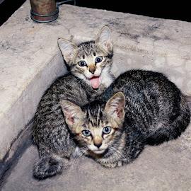 gmbr 2 bradik ni nk selpie..... hehehhehehe.... teruja sunggh hok alik blkg terrr....#straycat #selfie #kittycat #anakkucing by Shafik Anuar - Animals - Cats Kittens (  )