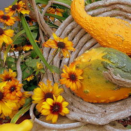 September by Debbie Eaton - Artistic Objects Still Life ( september still life, orange and green, fall flowers, gourds, baskets,  )