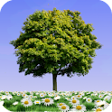Summer Trees Live Wallpaper icon