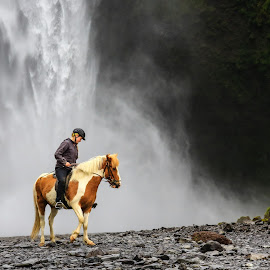 Seljalandsfoss ride by George Marcu - Animals Horses ( ride, iceland, seljalandsfoss, waterfall, horse )
