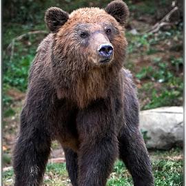 by Renos Hadjikyriacou - Animals Other Mammals