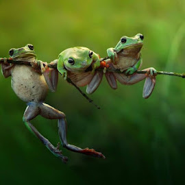 :: frog tale :: by Vianz . - Animals Amphibians (  )